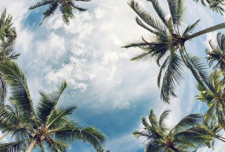 Palm tree tops against sky. Vintage filter effects.