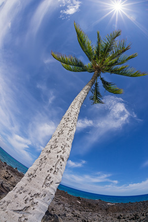 Palm tree top against blue sky and white clouds on a sunny day. Fisheye capture. Stock Photo