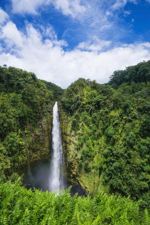 big island: Akaka Falls on Big Island, Hawaii