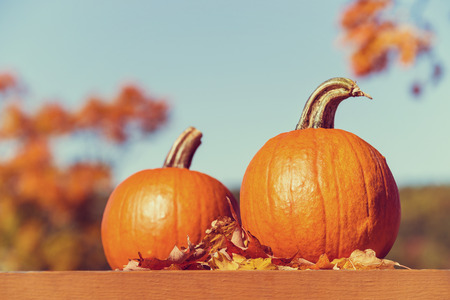 Pumpkins against autumn trees and blue sky. Vintage filter effects. Stock Photo