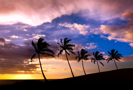 tree silhouettes: Tropical Hawaiian sunset with palm tree silhouettes Stock Photo