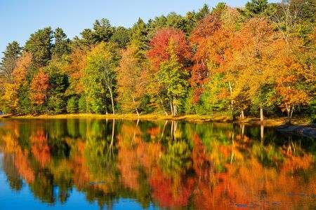 Colorful foliage reflections in pond water on a sunny autumn day 写真素材