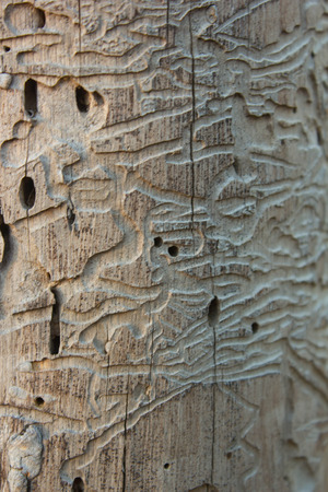 weevil: Nature Wooden texture, by weevil