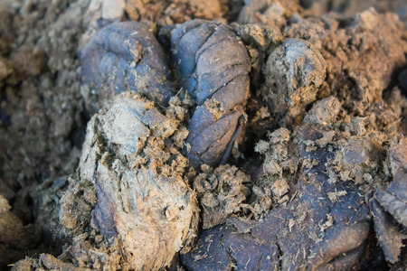 excrement: Close up of manure in nature Stock Photo