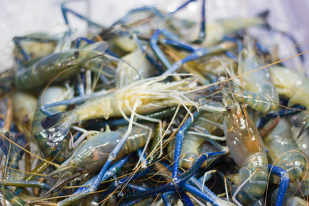 rosenbergii: Seafood: giant river prawn