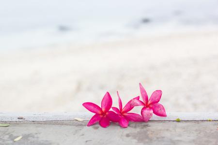 spa flower: Pink plumeria on the beach
