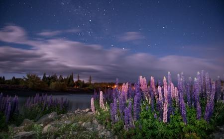 tekapo: Lake Tekapo  South Island, New Zealand