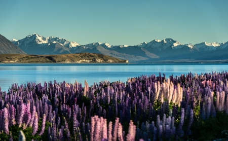 Lake Tekapo  South Island, New Zealand