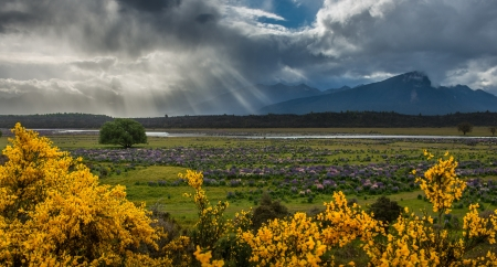 Lupins field from South island, New Zealand Stock Photo - 17190506