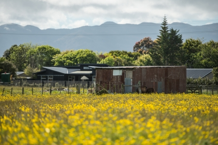 Flowers field from west coast of South island, New Zealand Stock Photo - 17239487