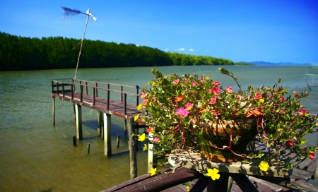 Thailand mangrove forest  photo