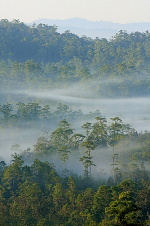 Winter forest with fog, Thailand  Stock Photo - 17603817