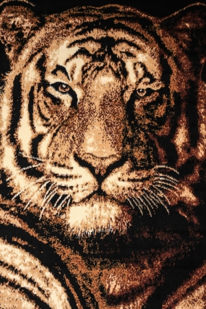 Tiger face, background  photo