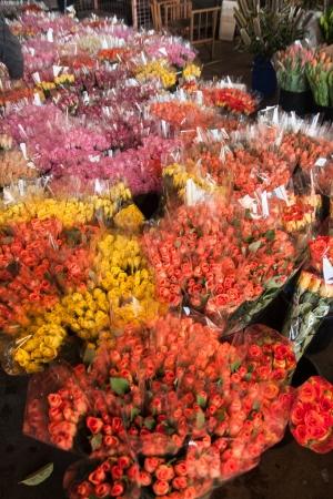 Rose em floricultura