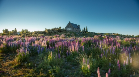 Beautiful landscape lake tekapo south island, New\ Zealand