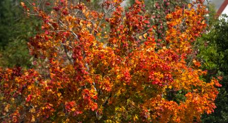 color in: Color del otoño en la isla del Sur, Nueva Zelanda.