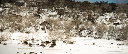moutains: Snow moutains in Kosciuszko National Park, Australia