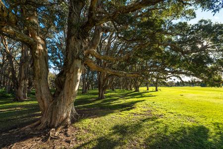 Natur of park in Sydney.