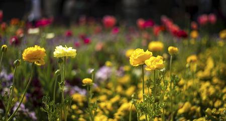 Flower blossom in Spring season Stock Photo