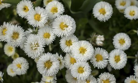 floriade: Flower blossom in Spring season Stock Photo