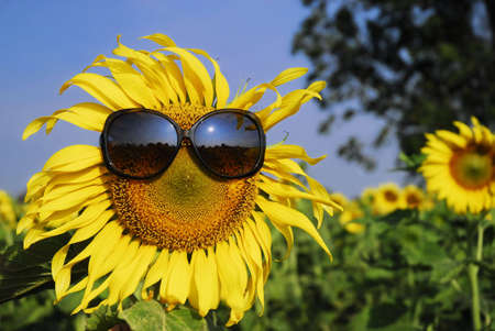 reflect: Sunflower wearing sunglasses