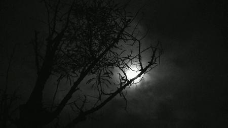 dark: Dark night