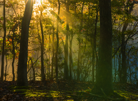 Beautiful morning background in late October forest with visible sun rays in a light haze Stock Photo