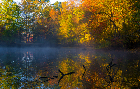 Colorful autumn background with mist and trees reflection in the water