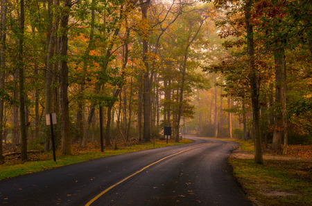 Autumn forest road scenery with colorful foggy trees on the background