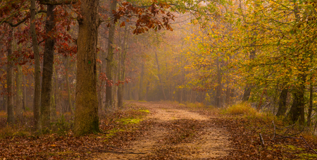 Late autumn forest background with fallen leaves and foggy trees on the background