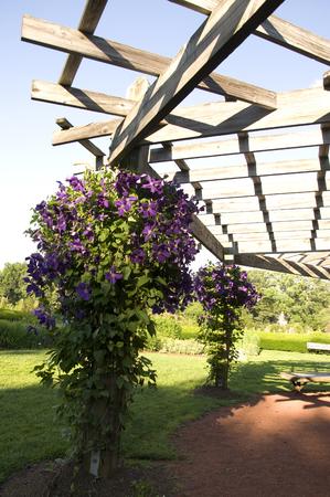 Elizabeth Park One: prachtige paarse bloemen in Elizabeth Park in West Hartford Stockfoto