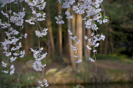 Elizabeth Park Ten: Beautiful White Flowers in Elizabeth Park, West Hartford Stock Photo