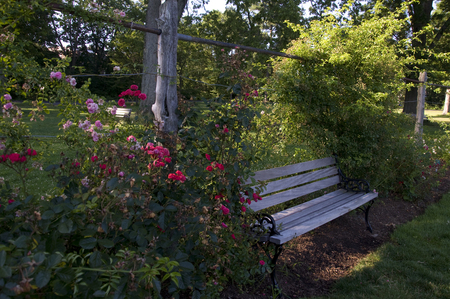 Elizabeth Park Eleven: A bench surrounded by beautiful rose bushes in Rose Garden