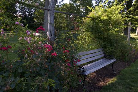 Elizabeth Park Eleven: een bank omringd door prachtige rozenstruiken in Rose Garden