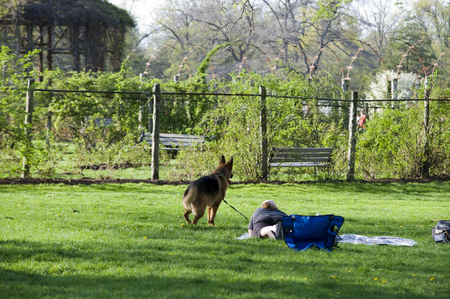 Elizabeth Park Thirteen: An relaxed evening for pets as well as owners in the peaceful garden