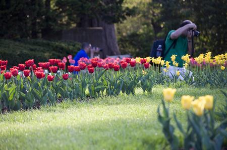 Elizabeth Park Vijftien - Shootig Tulips and Flora - Hemel voor fotografen Stockfoto