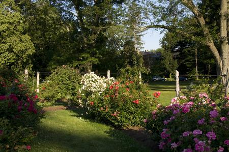 Elizabeth Park Sixteen - Beautiful Rose Garden in bloei in het voorjaar