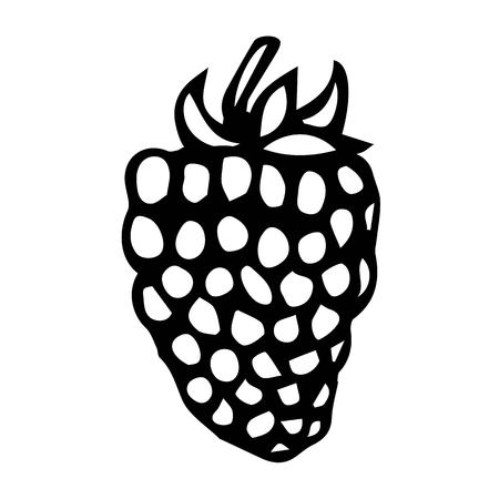 dewberry: BlackBerry Doodle Style Vector Sketch, Isolated on White Background.