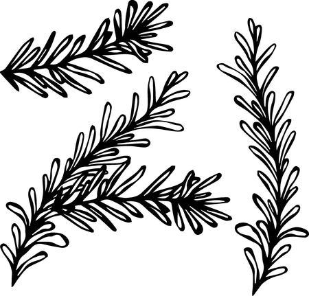 Food and Spice Vector Illustration. Fresh Rosemary Sprigs With Leaves.