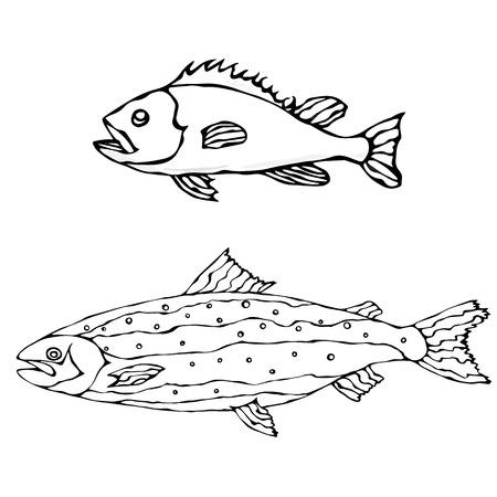 Set of Two Fishes. Freshwater Fish. Realistic Vector Illustration Isolated On a White Background Illustration