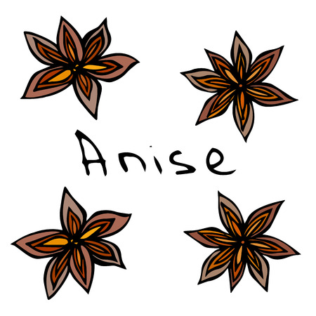 Stars of Anise. Vector Illustration Isolated On a White Background. Realistic Hand Drawn Doodle Style Sketch.