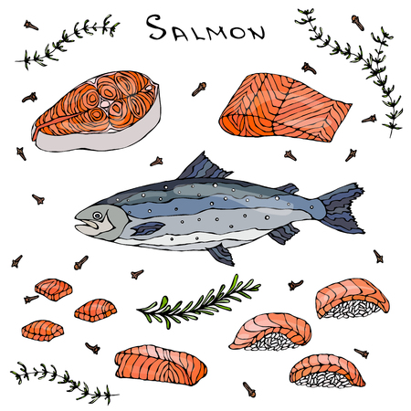 ready cooked: Steak, Filet, Slices and Sushi of Red Fish Salmon for Seafood Menu. Vector Illustration Isolated On a White Background. Realistic Hand Drawn Doodle Style Sketch.