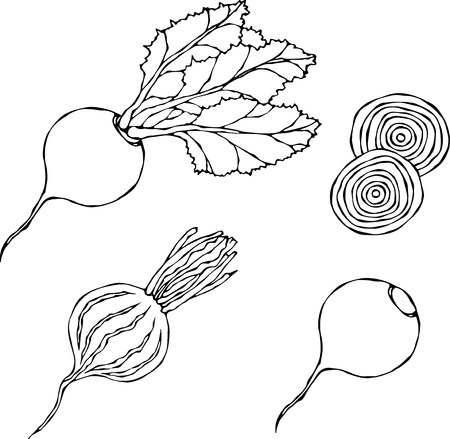 Set of Beet - Beetroot with Top Leaves and Half of Beet, Beet Without Leaves, Cut Beet Slices. Fresh Vegetable Salad. Hand Drawn Vector Illustration. Savoyar Doodle Style. Illusztráció
