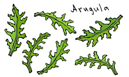Set of Arugula Rucola, Rocket Salad Fresh Green Leaves. Aromatic Herb. Fresh Cooking Salad Ingredient. Hand Drawn Illustration. Savoyar Doodle Style