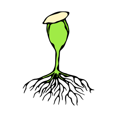 Vector Illustration of Sprout with Seed and Roots. Seedling, Shoot, Sapling Gardening Plant. Trees, Flowers, Vegetables Cucumber, Zucchini, Pumpkin, Melons Growing. Hand Drawn Savoyar Doodle Style