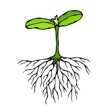Vector Illustration of Sprout with Three Leves and Roots. Seedling, Shoot, Gardening Plant. Trees, Flowers, Vegetables Cucumber, Zucchini, Pumpkin, Melons Growing. Hand Drawn Savoyar Doodle Style
