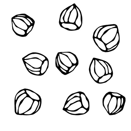 Whole Unpeeled Hazelnuts in Shell. Healthy Snack. Realistic Hand Drawn Illustration.