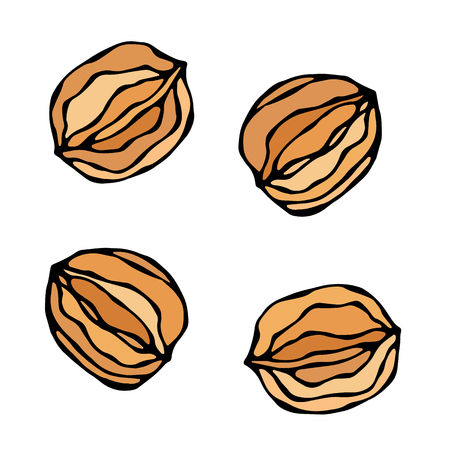 Whole Walnut in a Shell. Realistic Hand Drawn Illustration. Ilustração