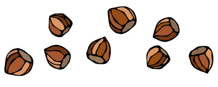 Whole Unpeeled Hazelnuts in Shell. Healthy Snack. Fresh Farm Harvest Product. Vegetarian Food. Realistic Hand Drawn Illustration. Savoyar Doodle Style Stock Photo