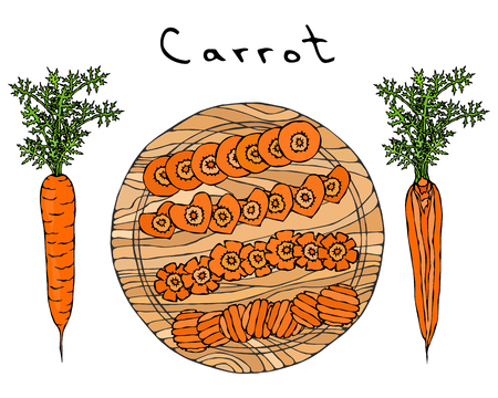 Fresh Orange Carrots with Leaves on a Cutting Wooden Board. Different Cuts of Carrot. Heart Shape Slices. Ripe Vegetables. Realistic Hand Drawn Illustration.  イラスト・ベクター素材